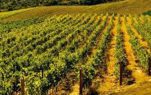 daou vineyard