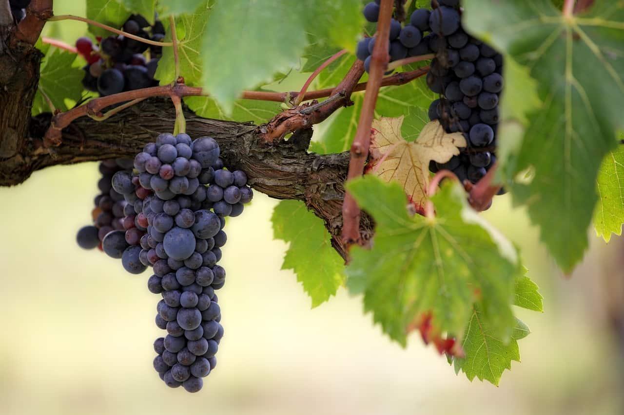 traverse wineries