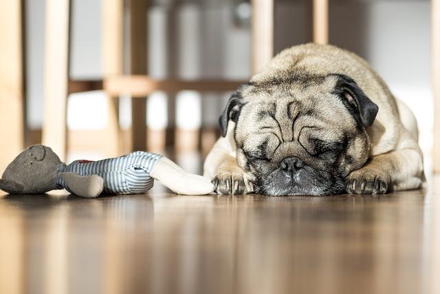 dog toys quiz